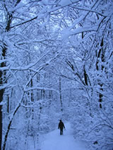 Winter Bushcraft Course